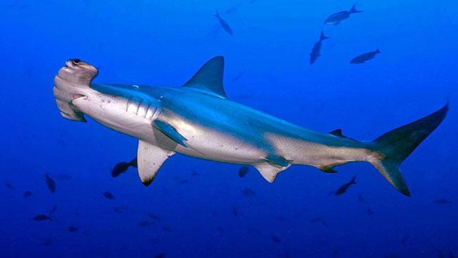 Зрение экзотических рыб