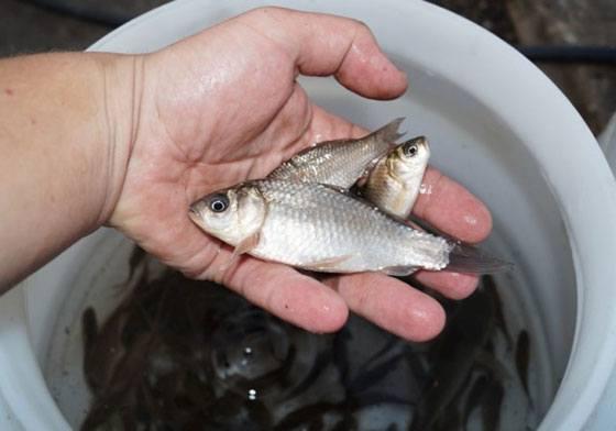 Ловля живца по открытой воде