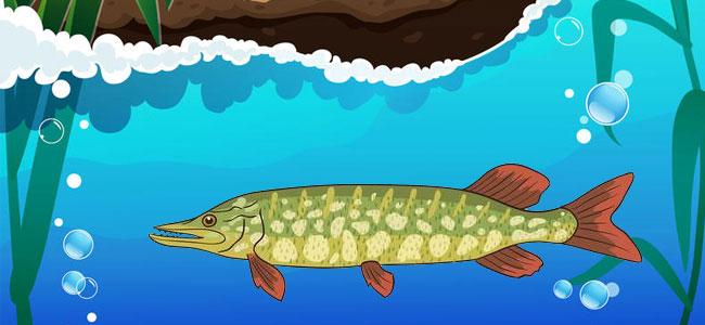 Особенности дыхания рыб