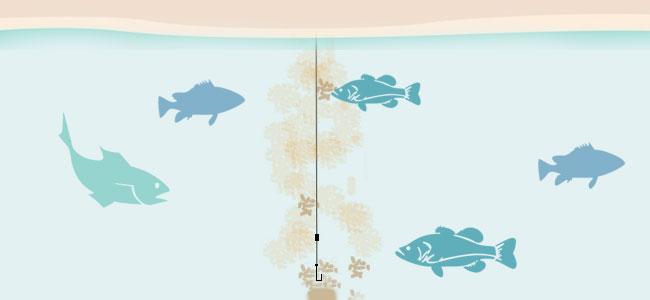 Тактика прикармливания рыбы