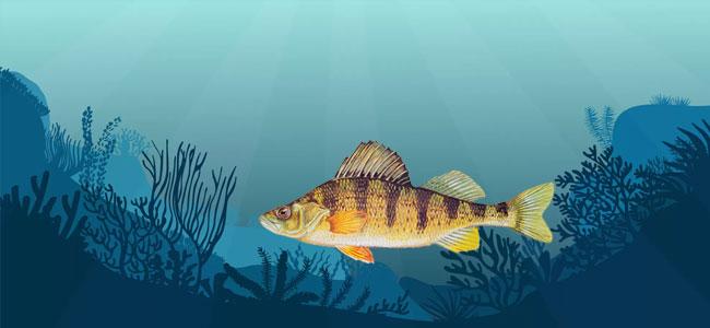 Сон и отдых у рыб