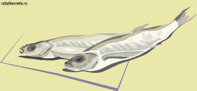 Сушка рыбы в домашних условиях