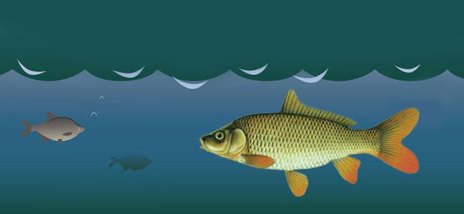 Зрение рыб