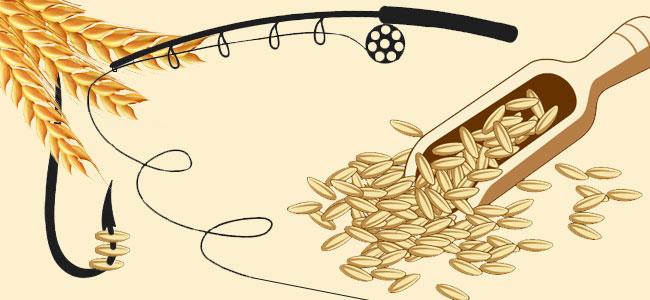 Способы приготовления пшеницы для рыбалки