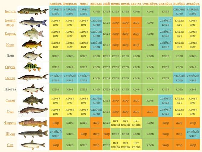 Рыболовный календарь по месяцам