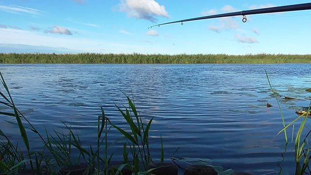 Влияние атмосферного давления на рыбу