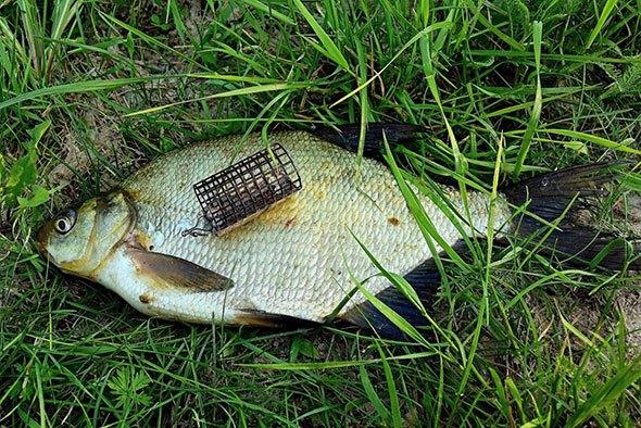 Фидерная рыбалка на леща
