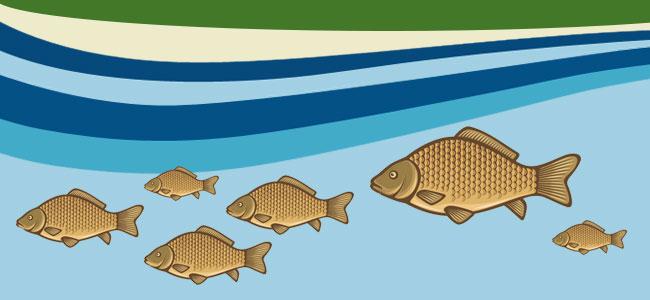 Нерест карася в разных водоемах