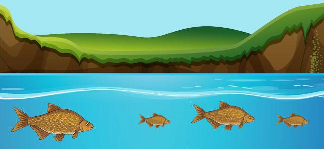 Восприятие запахов рыбами