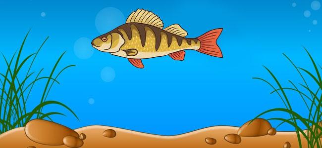 Восприятие окружающего мира рыбами