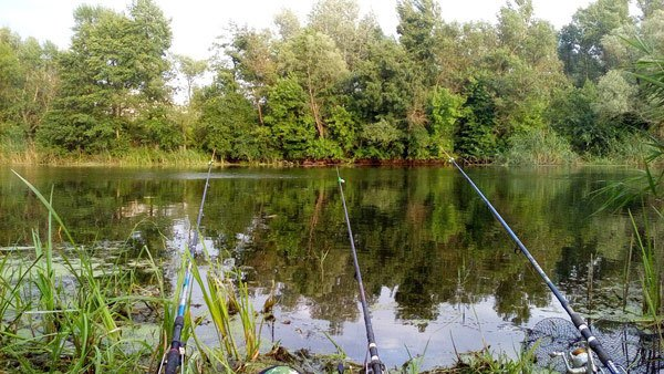 Пассивные способы рыбалки