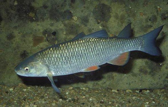 Внешний вид спящей рыбы