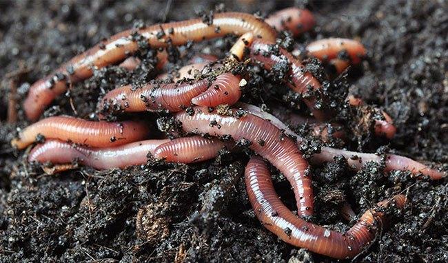 Хранение червей в зимнее время года