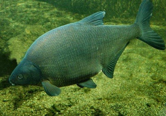 Особенности зрения рыб