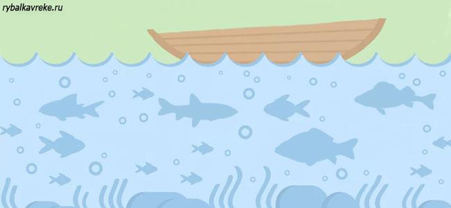 Виды пресноводных рыб